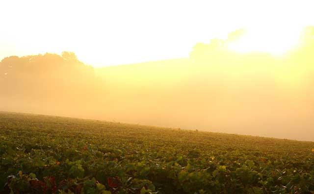 ジラルダン畑