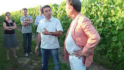 比較 ラトゥースとのブドウ畑