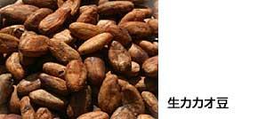 生カカオ豆
