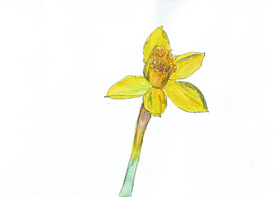 花 (Yellow doffadil)(2005.3.28.)