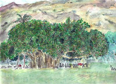 大きなバニヤンの木(ホノルル・カピオラニ公園 2002.9.17 )