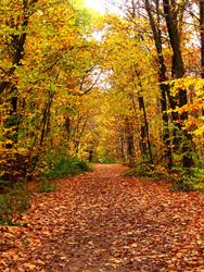 パリ郊外の森