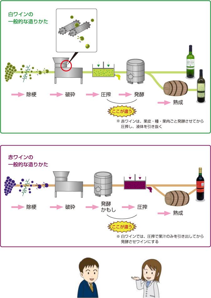 白ワインの一般的な造り方